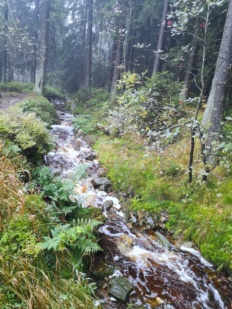 Harzer Hexenstieg Wasserfall