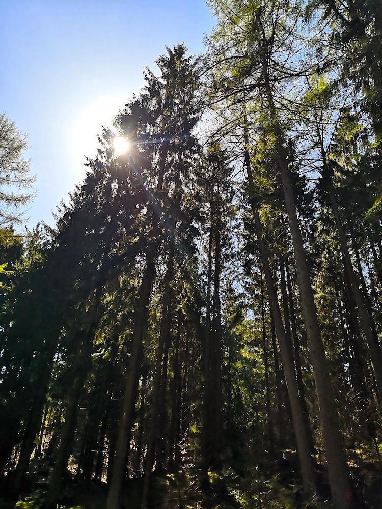Forst Rosengarten in den Harburger Bergen