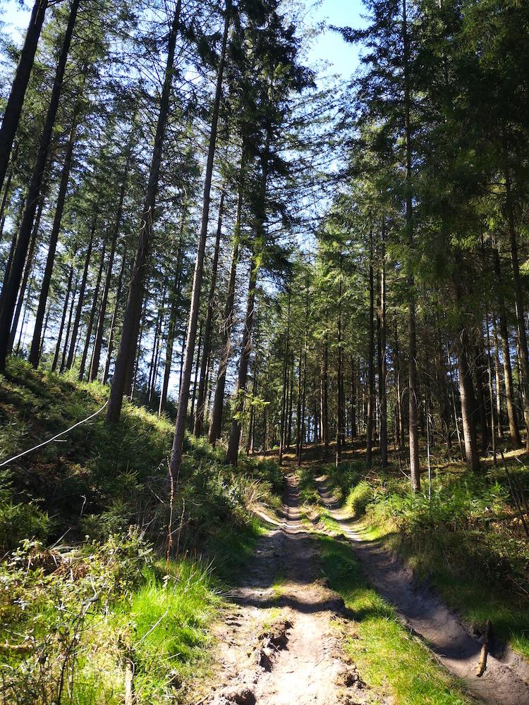 Wanderung in den Harburger Bergen