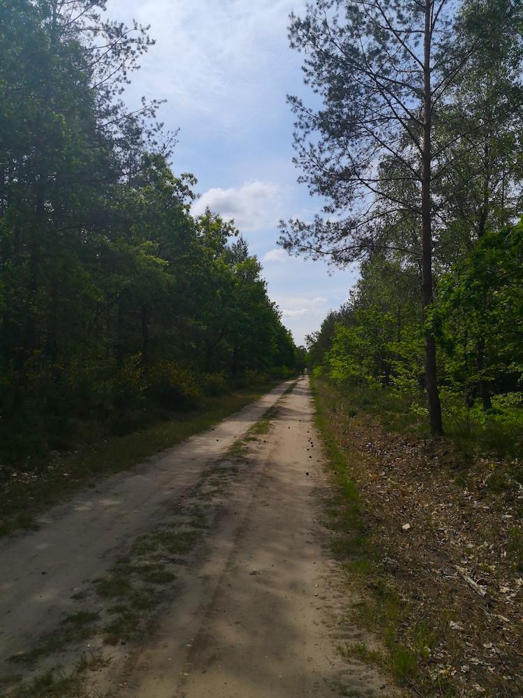 Endlose Waldwege