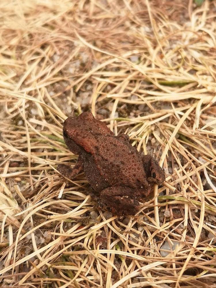 Frosch in der Heide