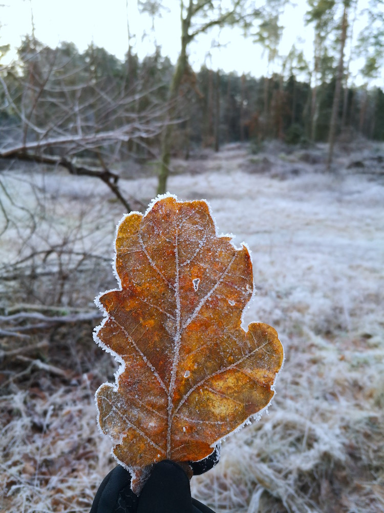 Winterliche Morgenstimmung