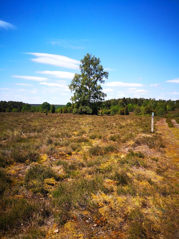 Heideflächen im Mai