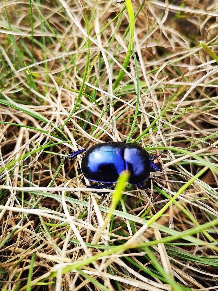 Ein Käfer am Wegesrand