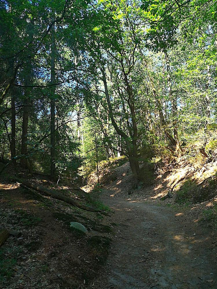 Im Wald auf dem Heidschnuckenweg