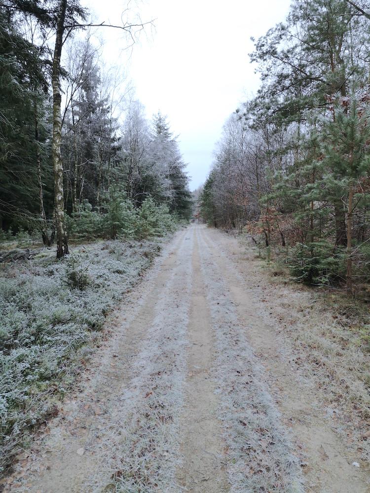 Einsame Waldwege