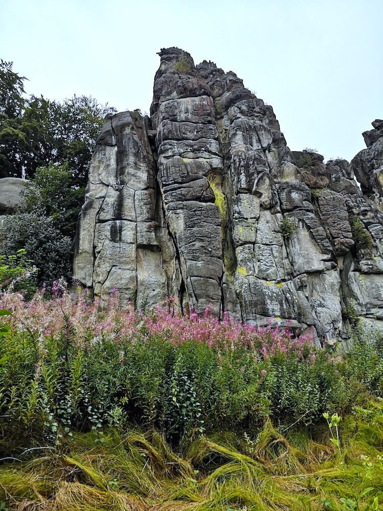 Blumen an den Felsen
