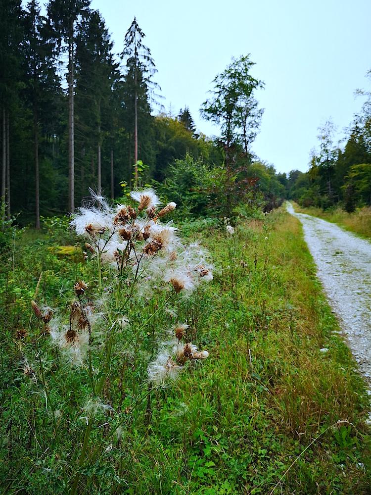 Waldweg im Teutoburger Wald
