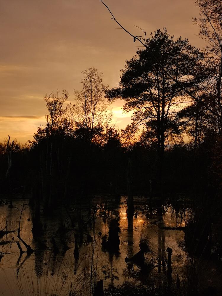 Goldene Stunde im Moor