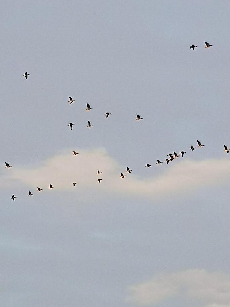 Die Zugvögel kehren zurück